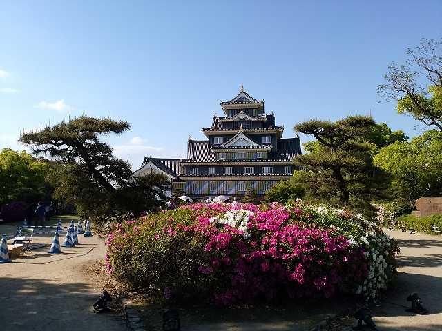岡山城(昼) (1)
