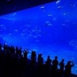 美ら海水族館①